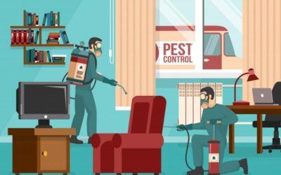 O controle de pragas deve acontecer o ano todo